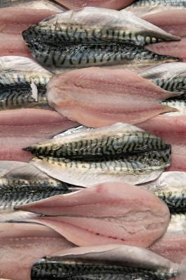 Service de rencontres de poissons frais
